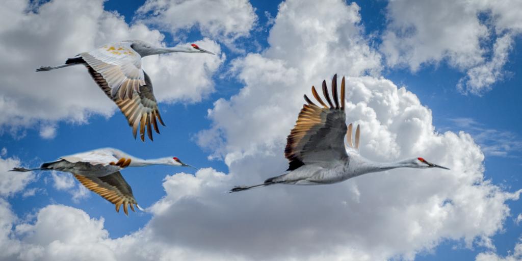 Establishing Amazon EC2 infrastructure for Oracle RAC database migrations with FlashGrid