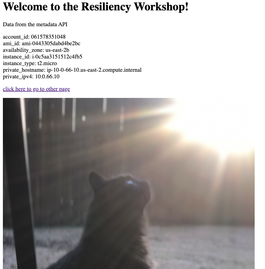 Application page with image of mountains replaced with image of a cat.