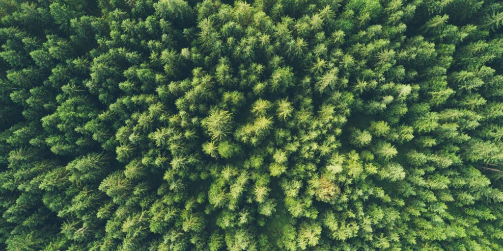 birds eye view of forest evergreen trees; Photo by John O'Nolan on Unsplash