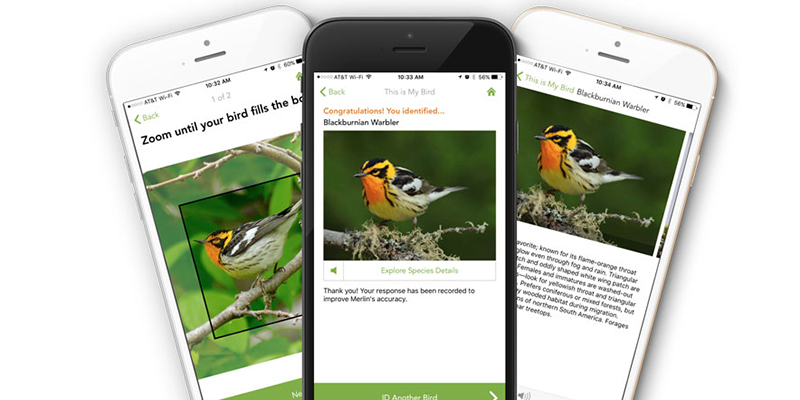 A screenshot of the Visipedia Bird app.