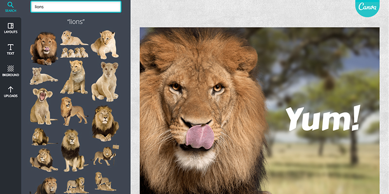 Canva Platform Lion Screenshot