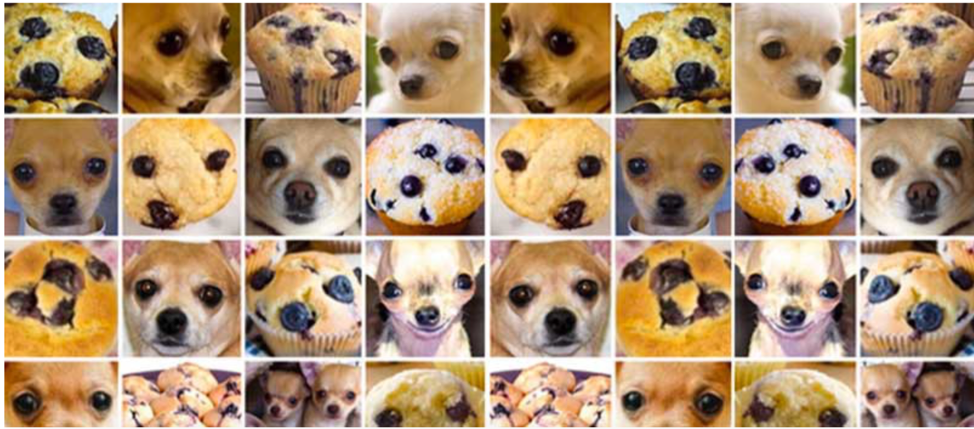 Muffins and chihuahuas