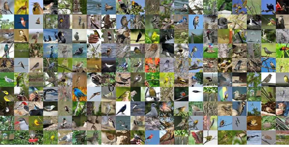 Identifying bird species on the edge using the Amazon SageMaker