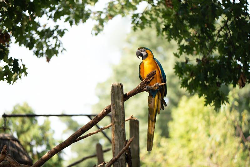 Bird Corrected Orientation