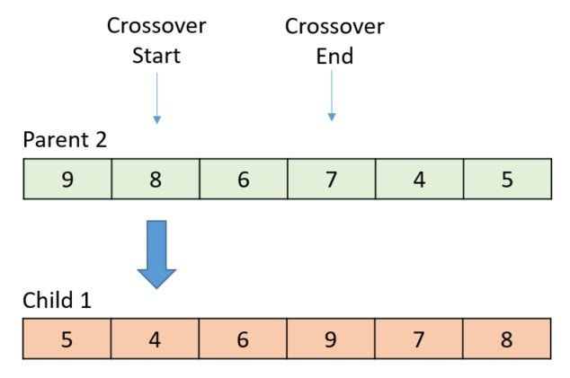 The following diagram shows the randomly selected start and end points, with the thick arrow indicating which gene is crossed over next.