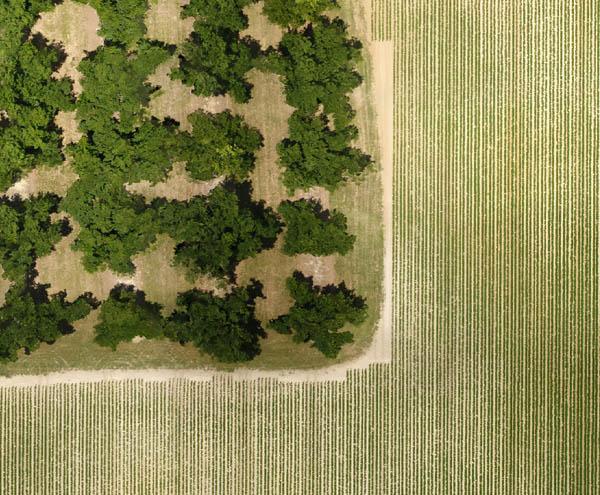 3 Farm