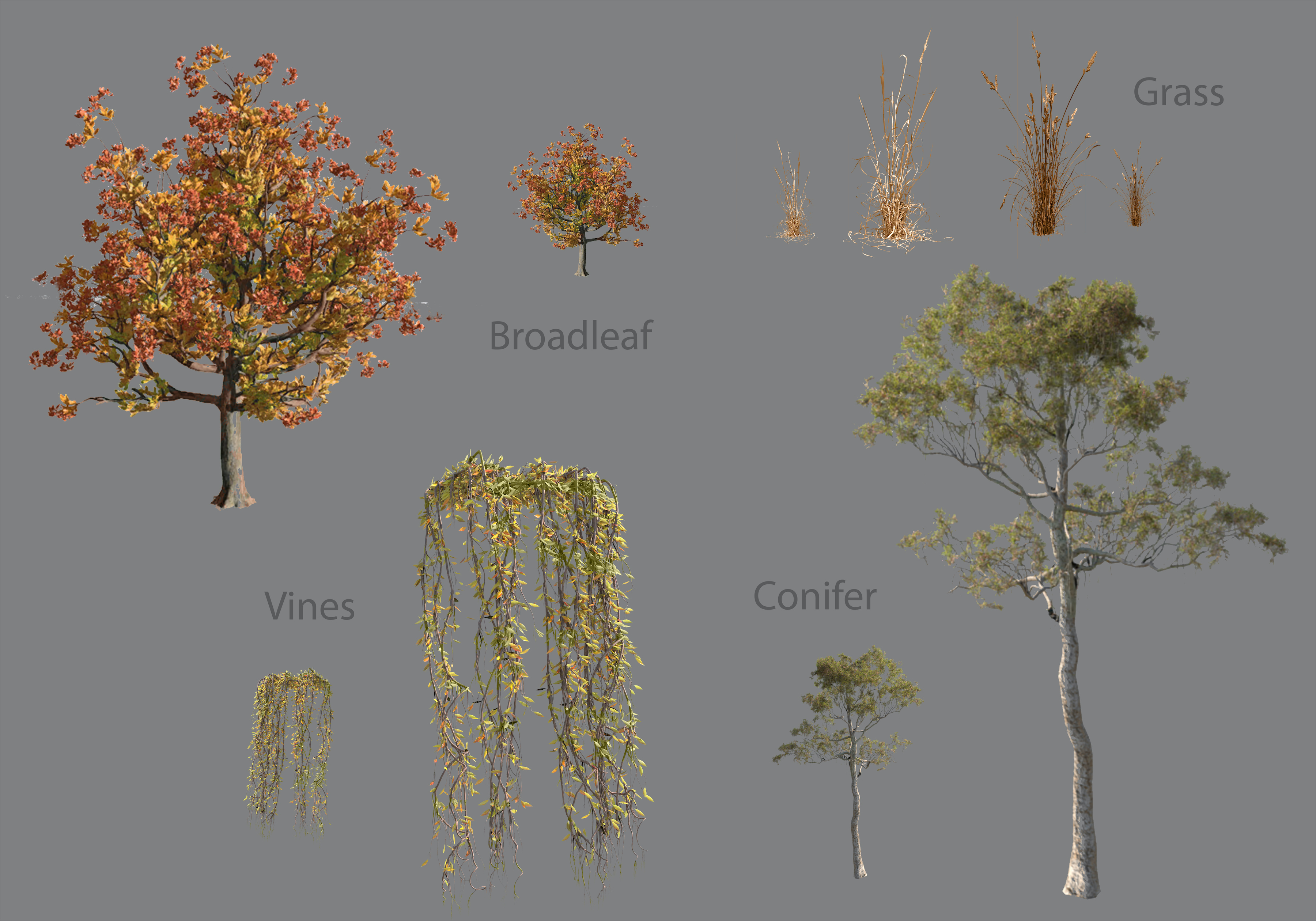 Renders of foliage types